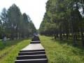 临清龙山森林公园