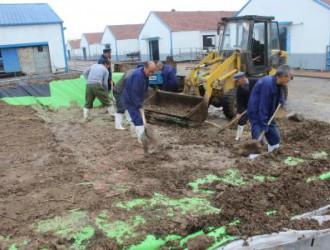 临清扎实推进玉米青贮收获机械化工作