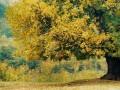 临清信息港消息:池塘边的榕树上, 知了在声声叫着夏天。